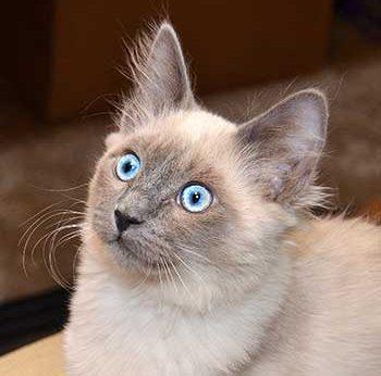Belle's Blue