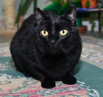 Blackie