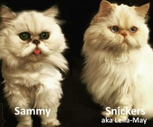 Snickers & Sammy