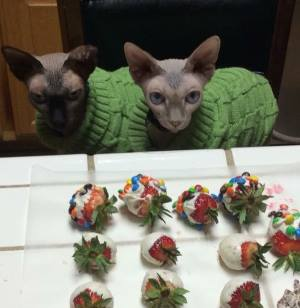 The Sphynx Sisters