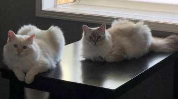 Benito (& Eli)