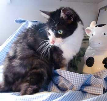 Oliver aka Radio Cat