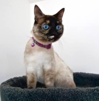 Penelope aka Penne