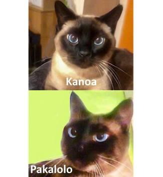 Kanoa & Pakalolo