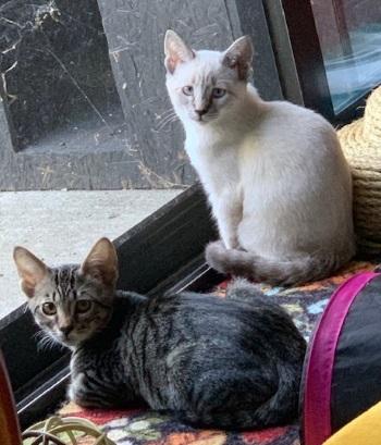 Sophie & Gracie