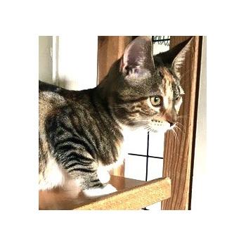 Kitten Electra