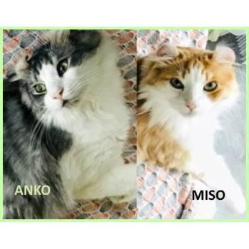 Anko & Miso