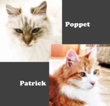 Patrick O'Mallery & Poppet