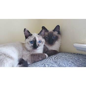 Oliver & Ashleigh
