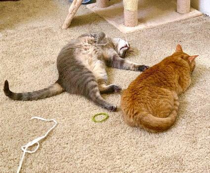Meredith (& Milo)