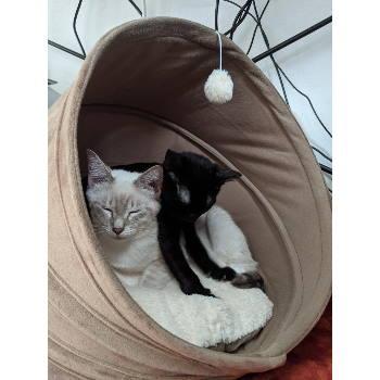 Toby (& Milo)