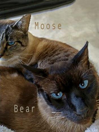 Moose (and Bear)