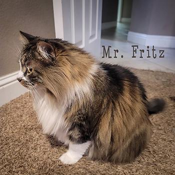 Mr. Fritz