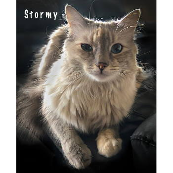 Stormy (and Sterling)