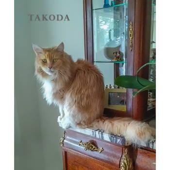 Takoda (and Zuni)
