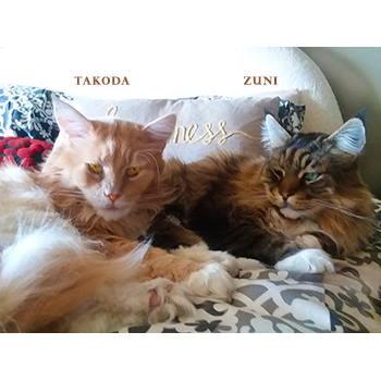 Zuni (and Takoda)