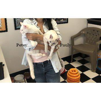 Pauly & Petey